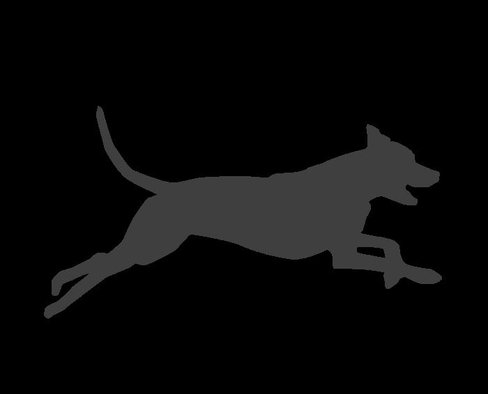 Adiestrador de perros Cuenca